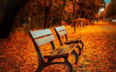 Lad dig ikke slå ud af efteråret