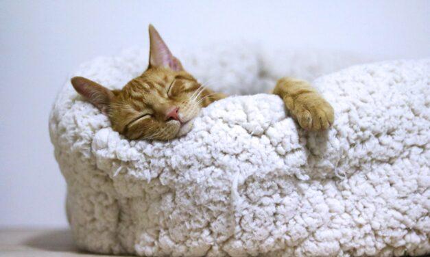 Din kat skal sove godt