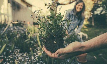 Hold dig ekstra sund med havearbejde