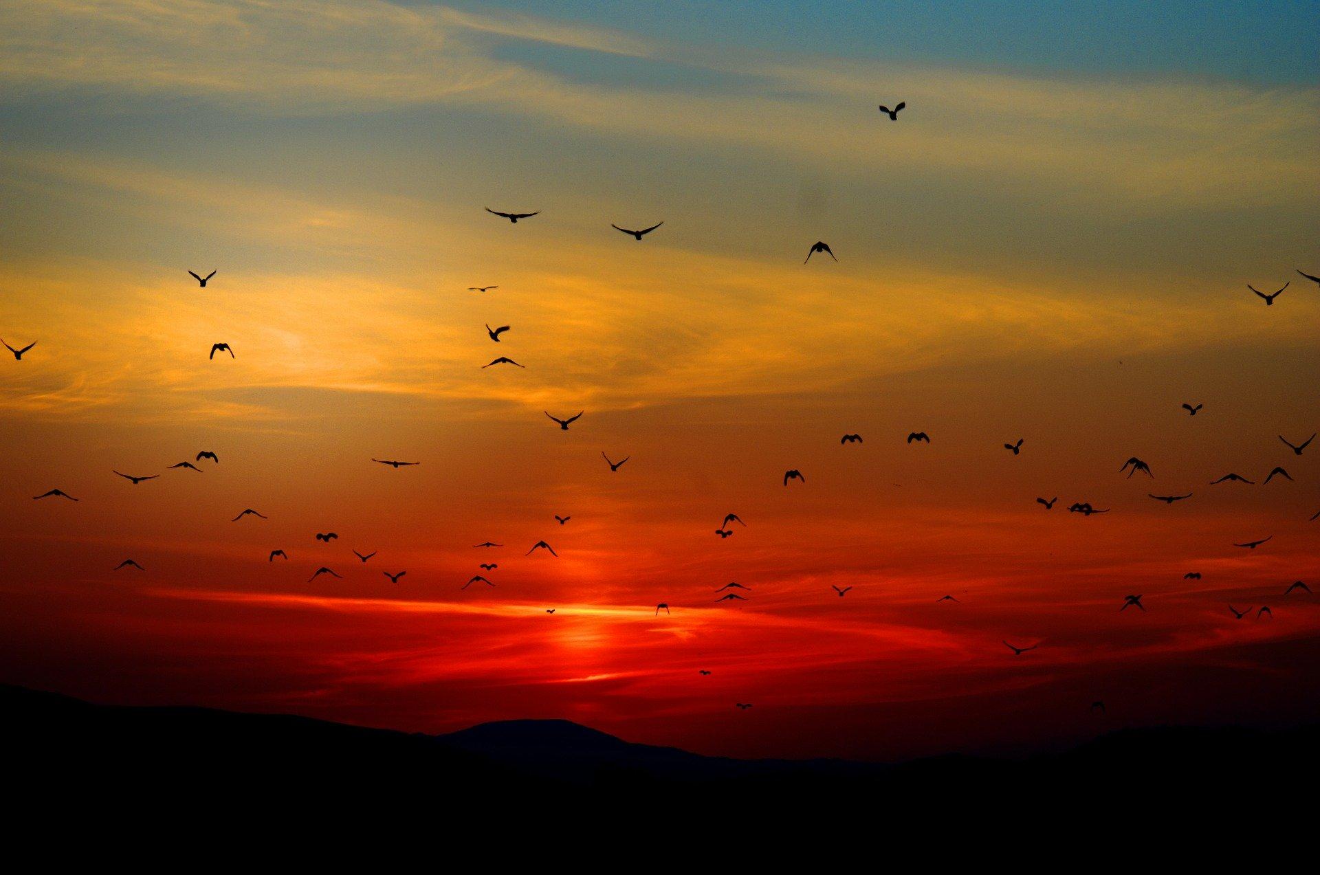 solnedgang og flyvende fugle